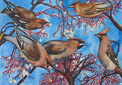 Waxwings, birds, berries