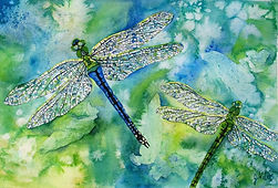 Emperor Dragonfly, dragonfly, dragonflies