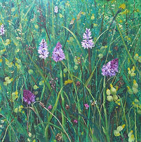 Meadows, orchids, flowers, selsley common