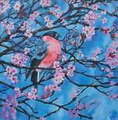 Bullfinch, Cherry Blossom