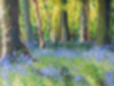 Bluebell woods, cotswold woods, spring woodlands