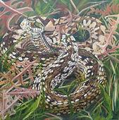 Adder, reptile, snake
