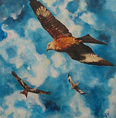 Red Kites, Red Kites