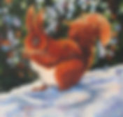 Red Squirrel, snow
