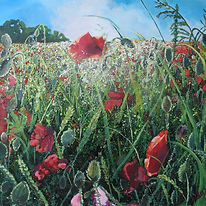 field poppies, red poppy