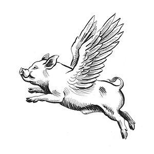 Flying Pig2.jpg