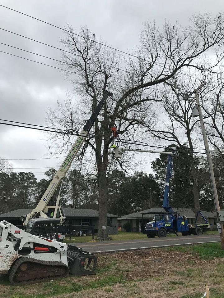 Jackson Street Tree REmoval