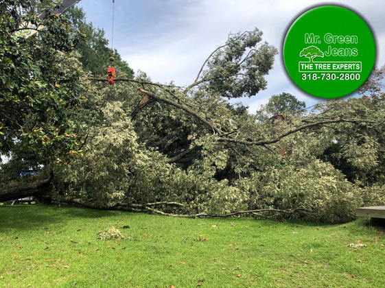 Home covered by Trees Ball tornado