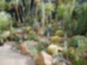 Cactus Cacti Garden Collectors Corner Succulents