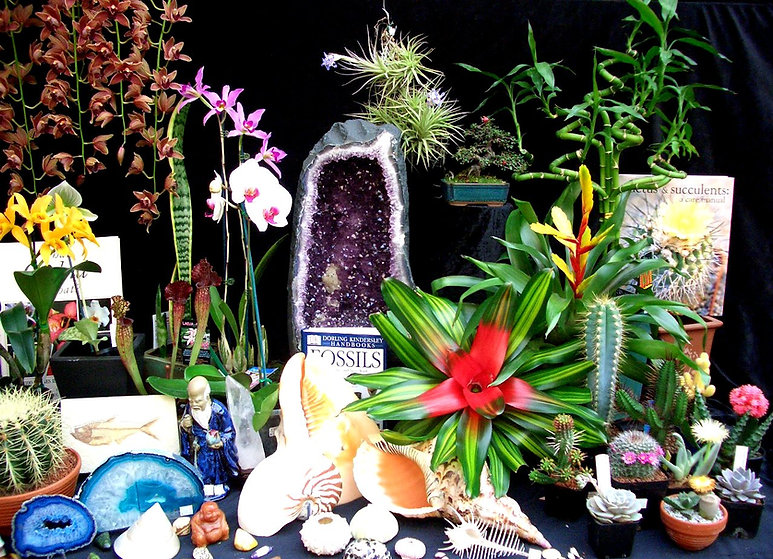 Cacti Cactus Bromeliads Carnivorous plants Gems Minerals Shells Fossils Bonsai Lucky Bamboo Collectors Corner