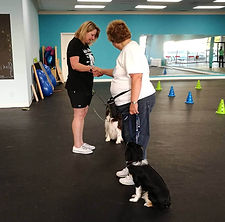 Cosmic Canine Group Dog Training Classes