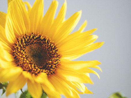 The Meaning of the Sunflower