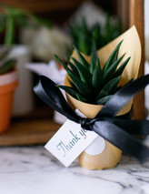 JosetteCacnio_succulents(107of39).jpg