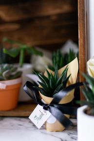 JosetteCacnio_succulents(105of39).jpg