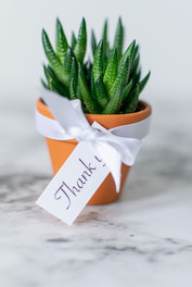 JosetteCacnio_succulents(123of39).jpg