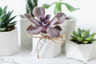 JosetteCacnio_succulents(128of39).jpg
