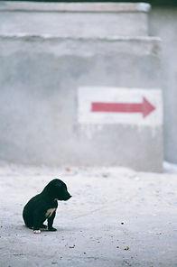 Arrow and black pup.jpg