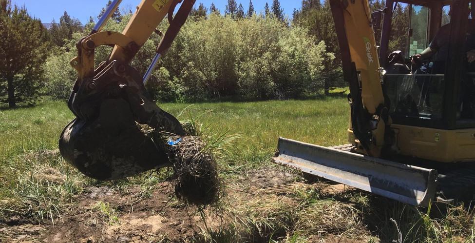 Upper Truckee Marsh Restoration -18.jpg