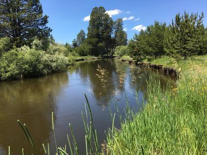 Upper Truckee Marsh Restoration