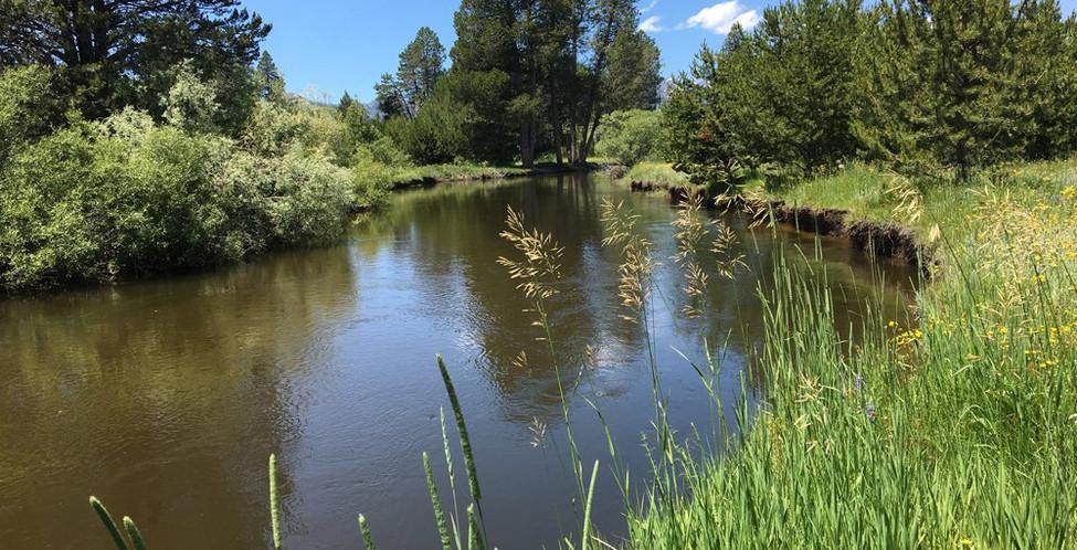 Upper Truckee Marsh Restoration -10.jpg