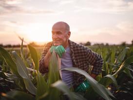 Farmer standing in field with shovel ref