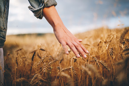 Wheat feild - hand view.jpg
