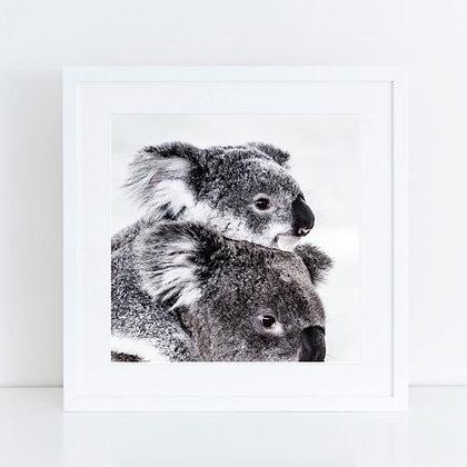 Koalas: Set of 2