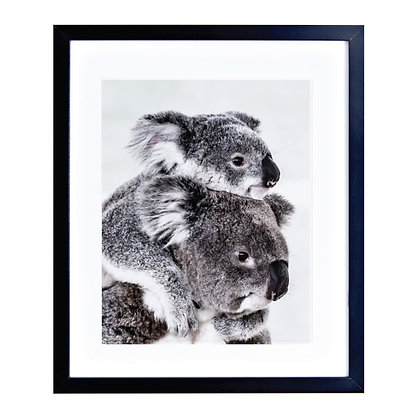 Koalas (close up)
