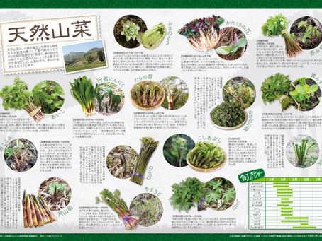天然山菜ポスター販売開始