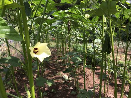 オギプロファーム 栽培中の作物リストを更新しました