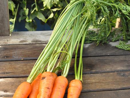 オギプロファームの8月の新鮮野菜セットのご案内