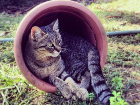 חיסונים וטיפולים מונעים בחתולים