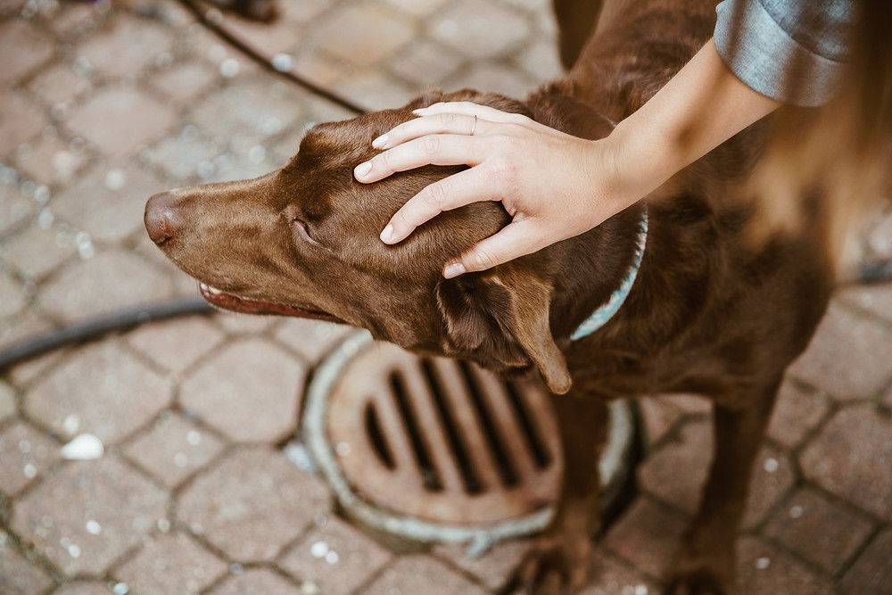 חרדת נטישה בכלבים