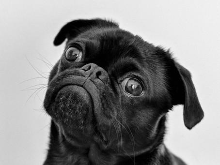 מכות חום בכלבים