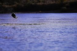 Salmon4_Fotor