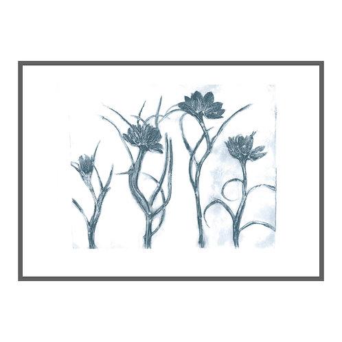 Fritillaria 'Indigo'