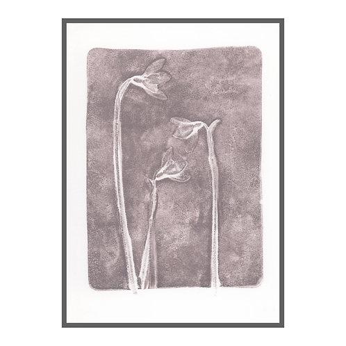 Snowdrops I 'grey lavender'