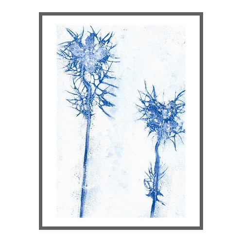 Love-in-a-Mist 'elektrisches Blau'