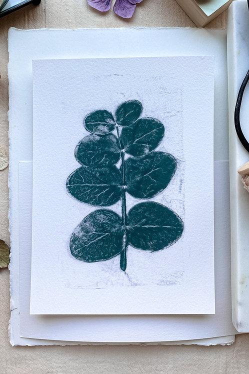 Eukalyptus I 'graugrün'