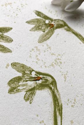 Close-up Snowdrops