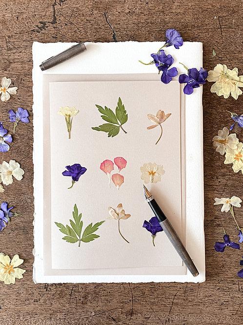 Herbarium Card IV