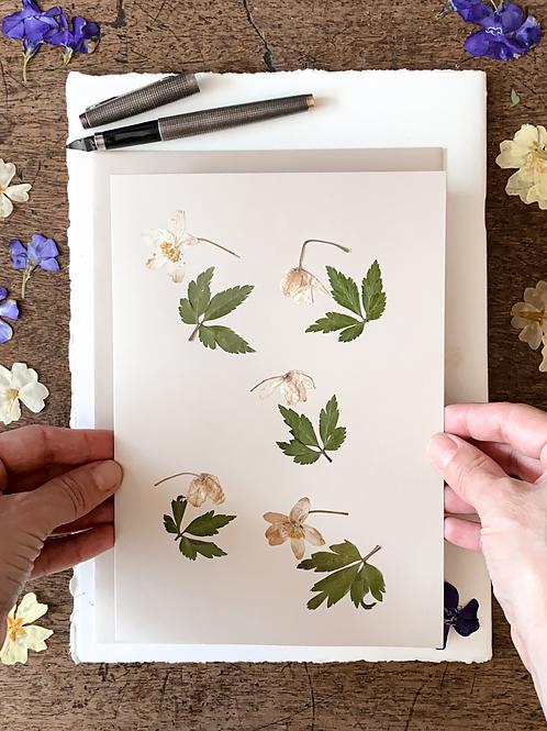 Herbariumkarte II