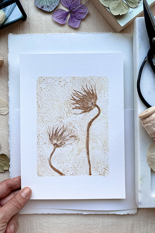 Pasque flower II 'ochre'