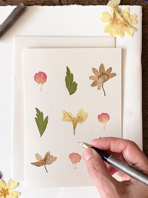 Herbariumkarte V.