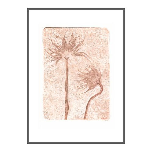 Pasque Blume I 'Ingwer'
