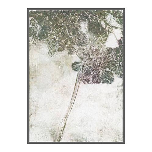 Hydrangea 'mild green'