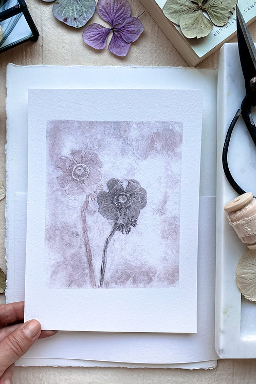 Anemone 'soft pink'