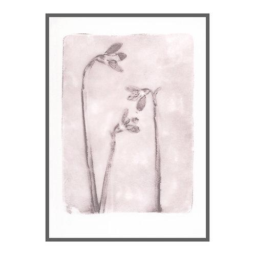 Snowdrops II 'grey lavender'