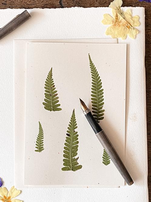Herbariumkarte VI