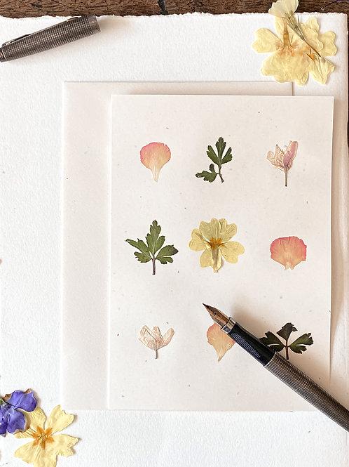 Herbariumkarte VIII